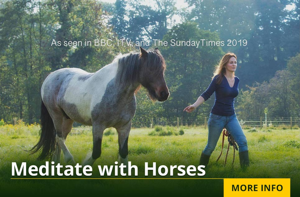 Meditate with Horses